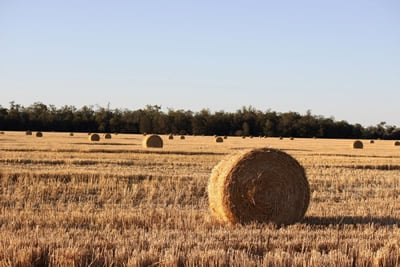 Water supply is vital to areas of the State's south-west, supporting graziers and crops